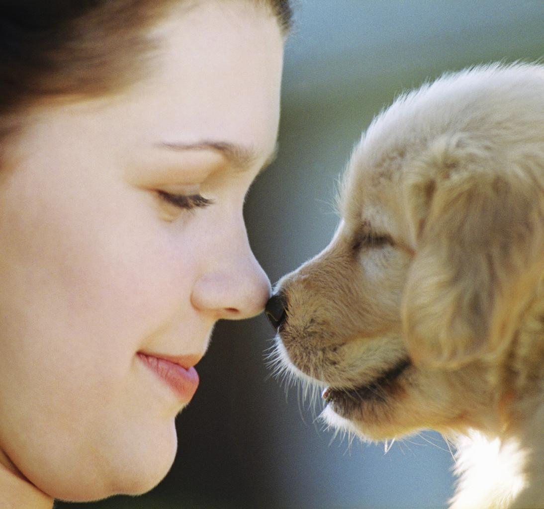 نتيجة بحث الصور عن Dog and a person
