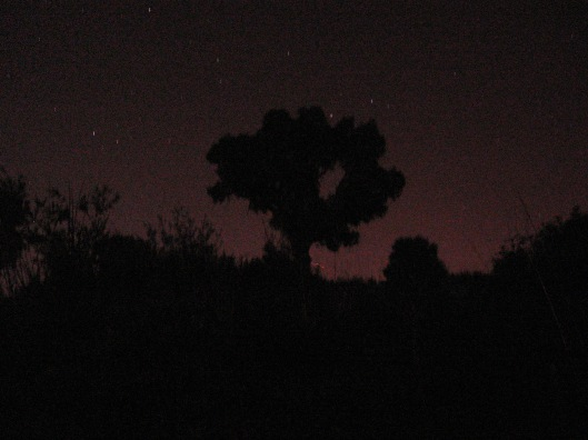IMG_0492_-_a_tree_at_night,_experiment